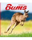 En känguru hoppar fram.