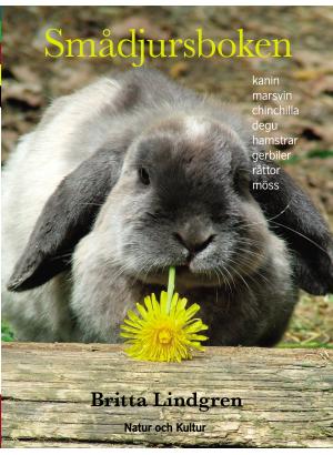 En kanin.