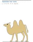 En kamel.