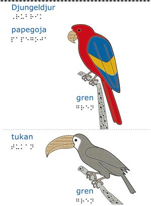 En röd papegoja.