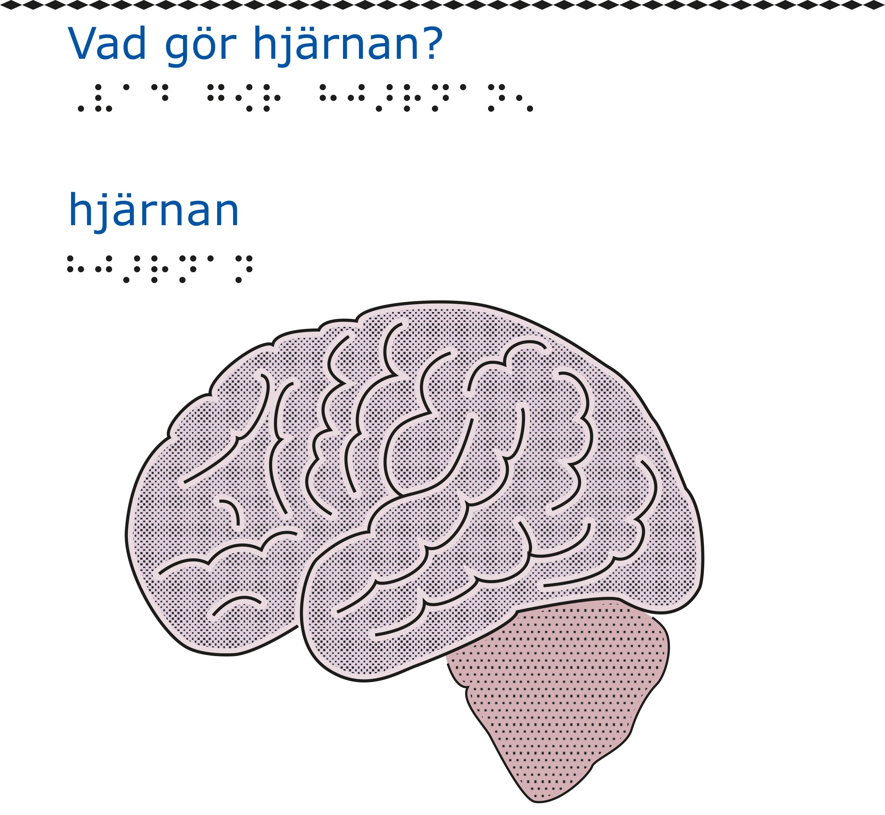 En hjärna sedd från sidan.
