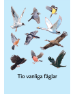 Diverse fåglar mot en blå bakgrund.