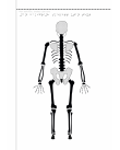Man bakifrån, skelett utan text på svällpapper.