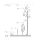 Växtskikt i barrskog.