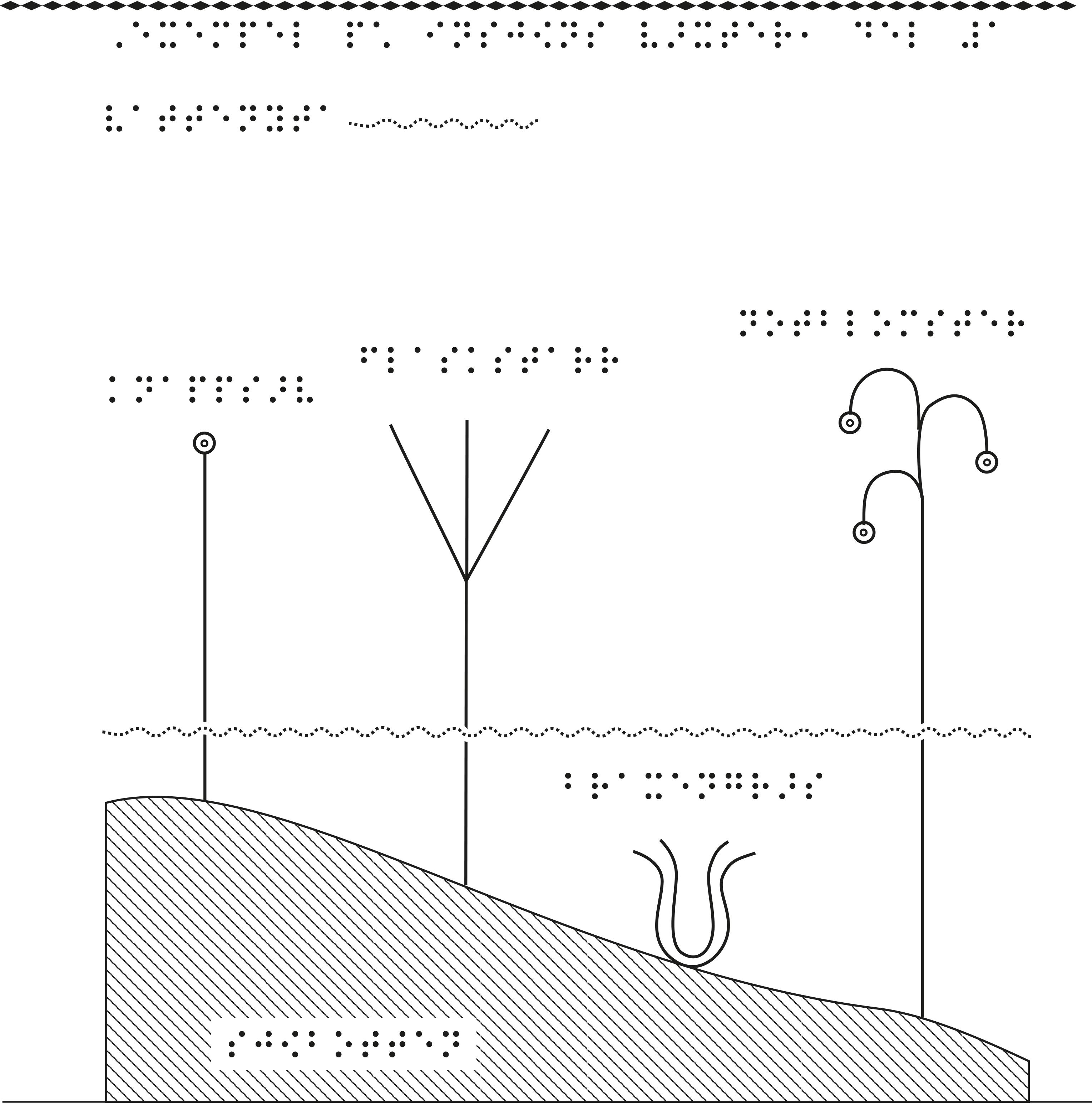 Fyra olika sjöväxter i relief med tillhörande punktskrift.
