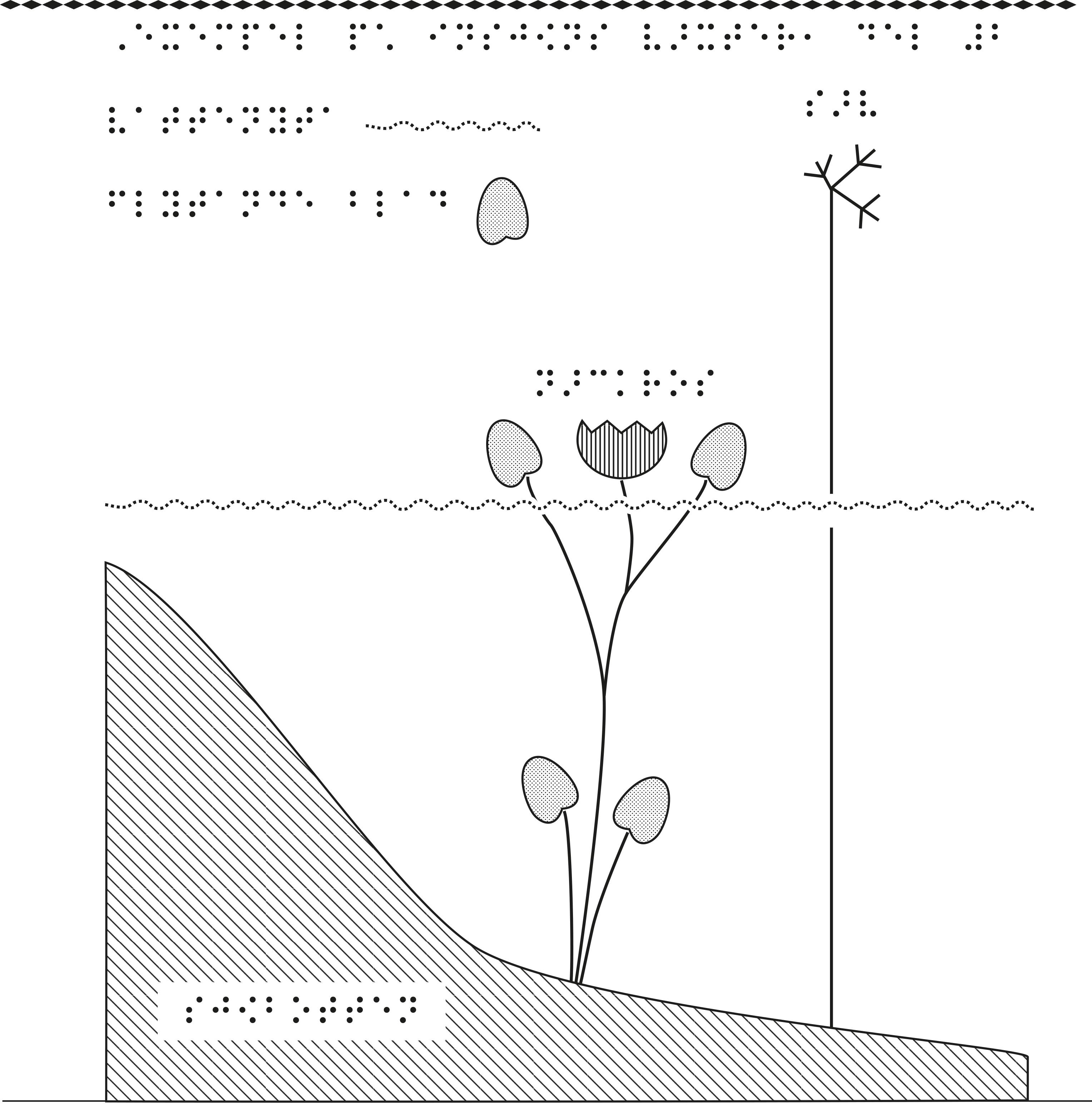 Två sjöväxter sedda från sidan, från sjöbotten till ytan.