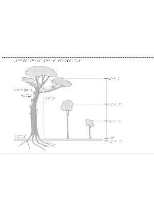 Tre träd i olika storlekar hemmahörande i regnskogen.