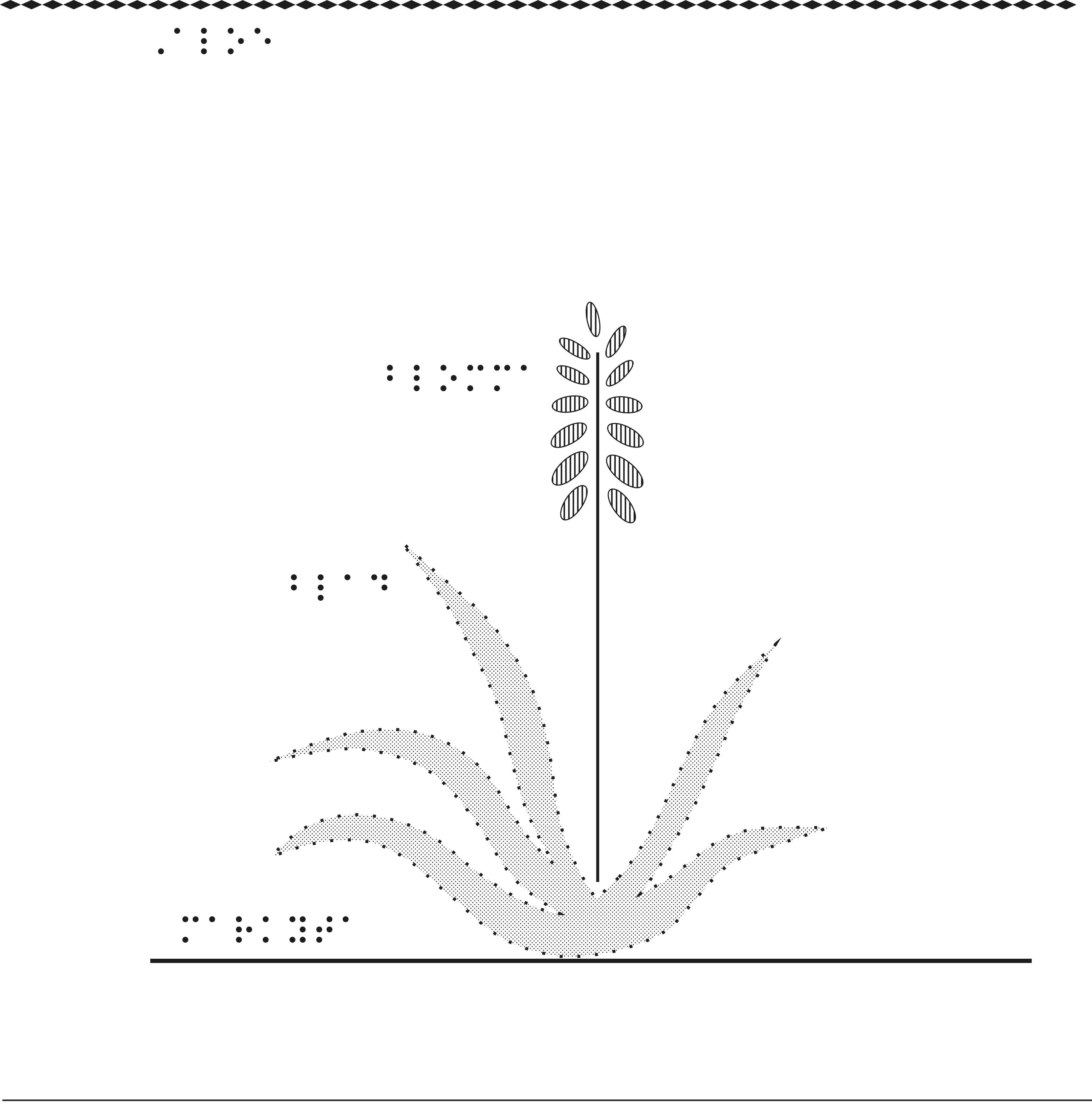 En aloeväxt sedd från sidan.