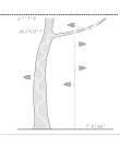 Ett träd med lianer i relief.