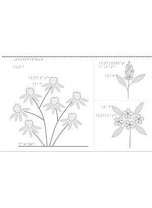 Taktil bild på Rhododendron.