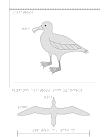 Taktil bild på en albatross.