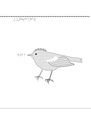 Taktil bild på en kungsfågel.