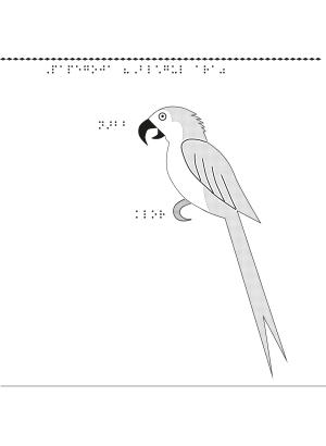 Taktil bild på en papegoja (Blågul ara).
