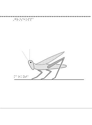 Gräshoppa i relief.