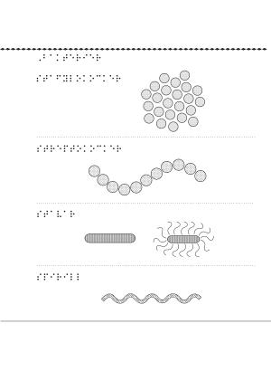 En bild på olika sorters bakterier, bland annat stafylokocker.