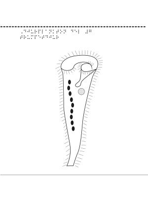 Djurplankton, trumpetdjur.