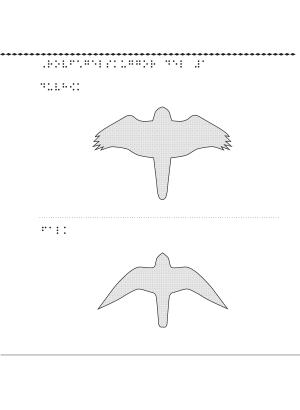 Två skuggor av en rovfågel.