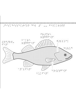 En bild på en fisk.