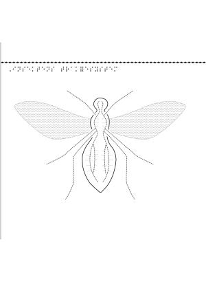 Visning av insekternas trakésystem.