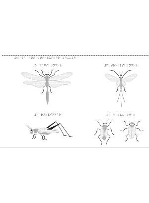 Olika sorters insekts grupper.