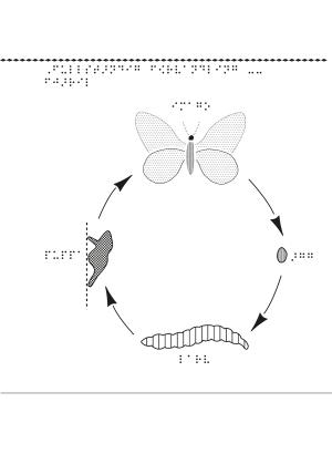En bild om hur fjärilen förvandlas från en larv till en fjäril.