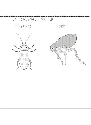En bild på insekter som lever inomhus.