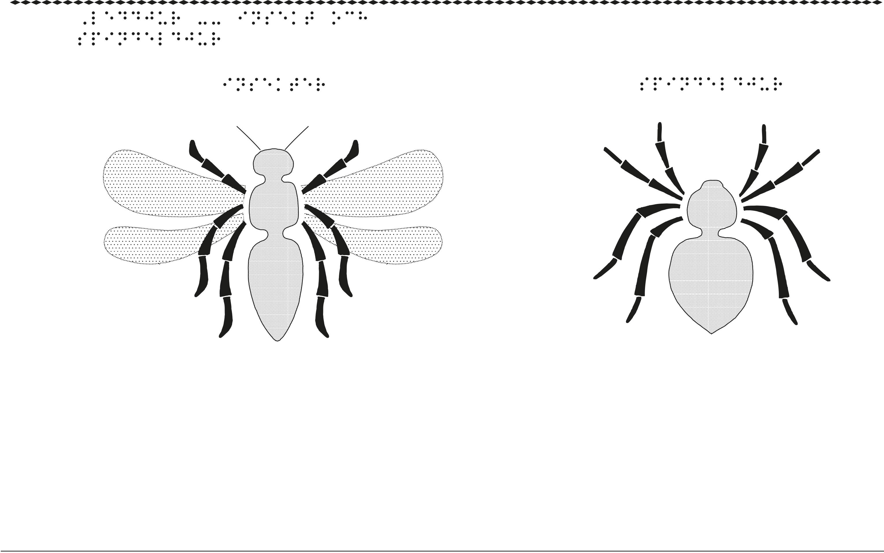 En bild om leddjur, insekter och spindlar.