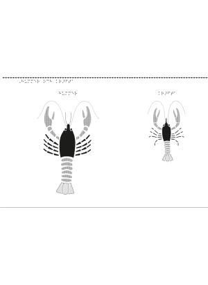 En hummer och en kräfta.