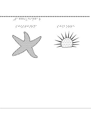 Tagghudingar – sjöstjärna, sjöborre.