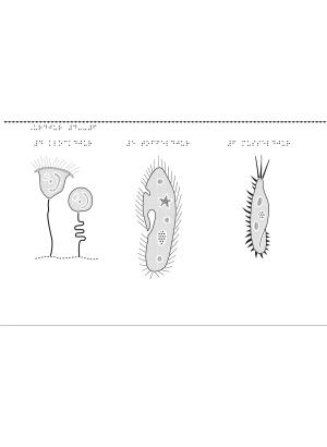 Urdjur del 4–6: klockdjur, toffeldjur, musseldjur.