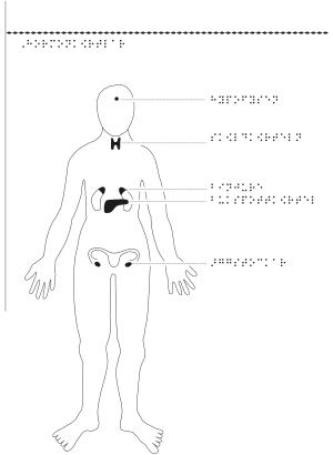 Kvinna framifrån med hormonkörtlar markerade.