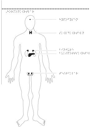 Man framifrån med hormonkörtlar markerade.
