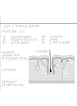 Hud i genomskärning med punktskrift.