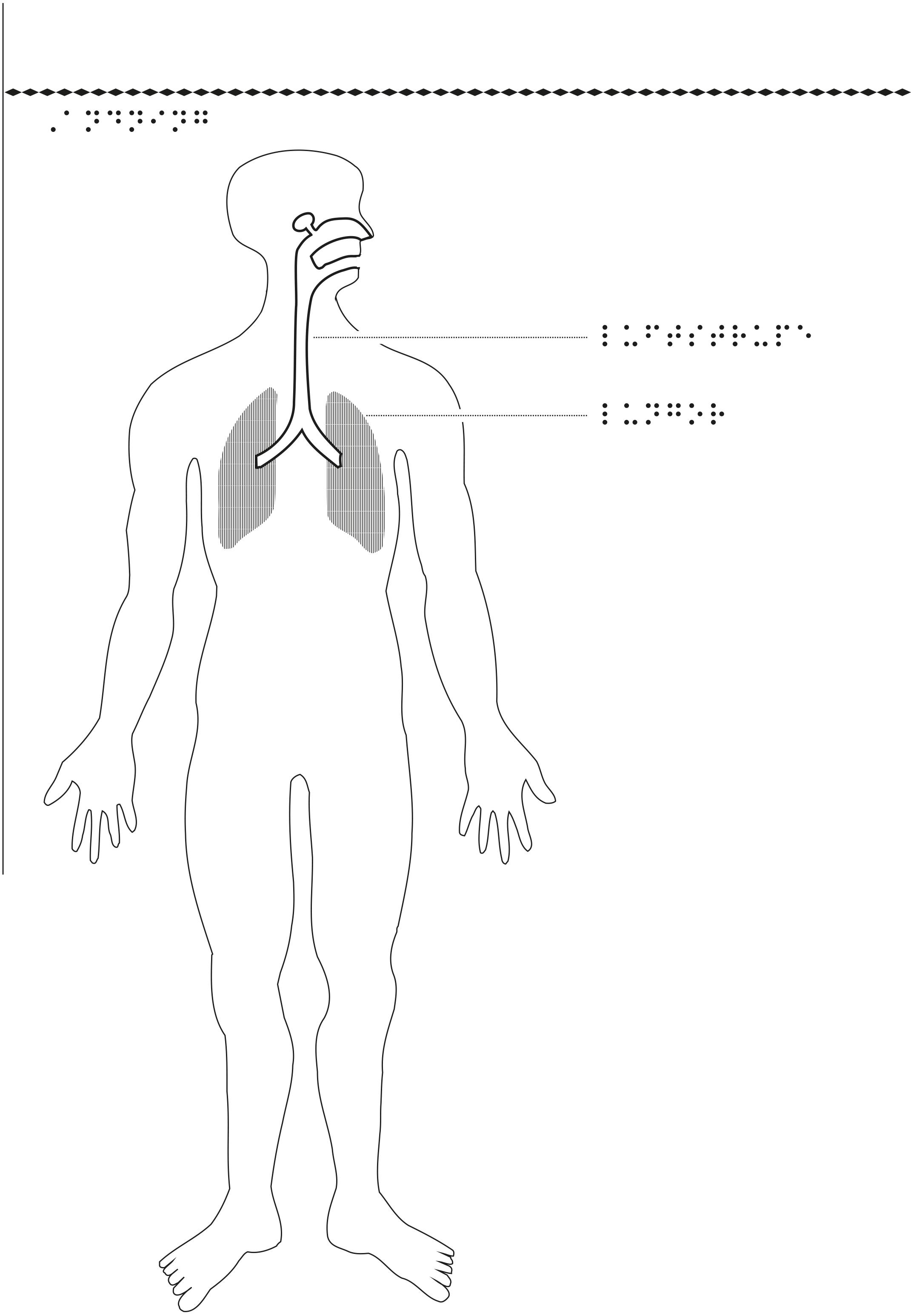 Man i genomskärning med lungor och luftvägar markerade.