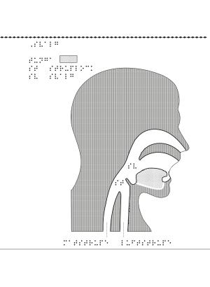 Huvud i profil med svalg markerat.