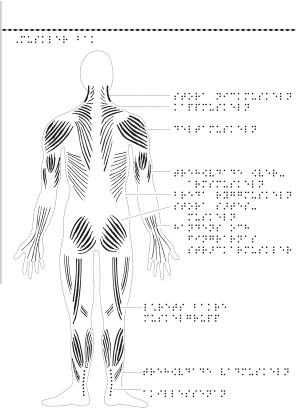 Man bakifrån med muskler markerade.