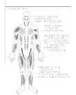 Man framifrån med muskler markerade.
