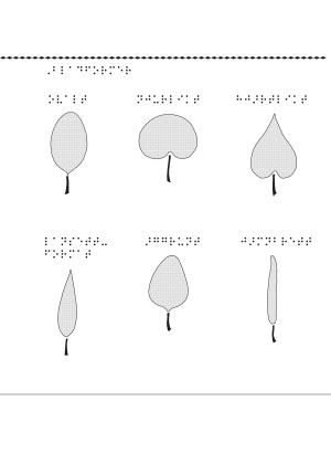 Bladformer – ovalt, njurlikt, hjärtlikt, lansettformat, äggrunt, jämnbrett.