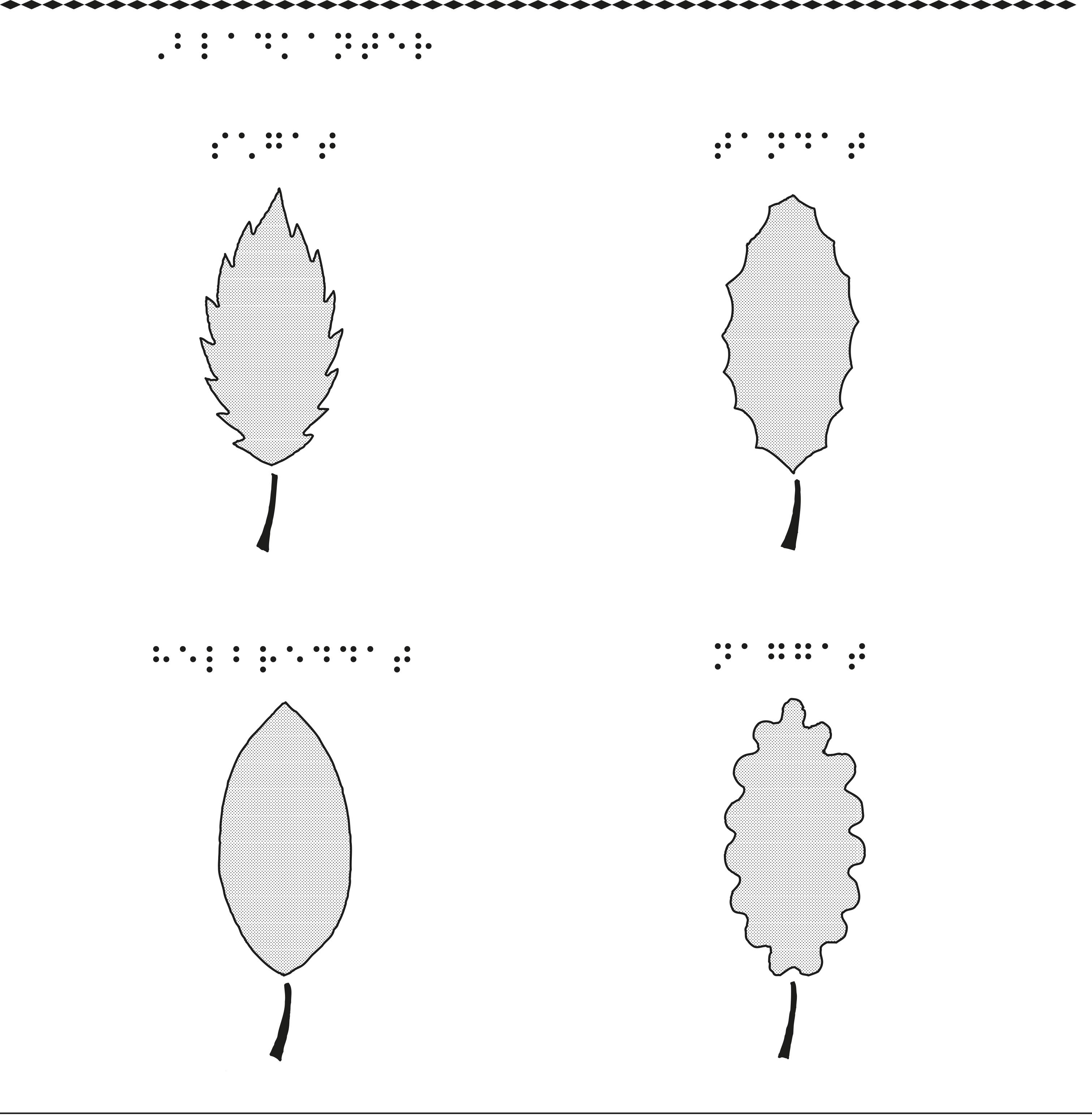 Fyra olika former på bladkanter.