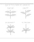 Fyra sorters blad på stjälkar.