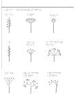 Nio olika blomställningar.
