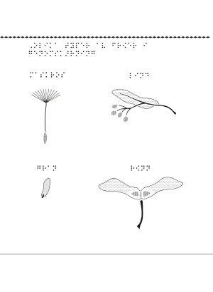 Olika typer av fröer i genomskärning.