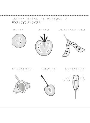 Olika typer av frukter i genomskärning.