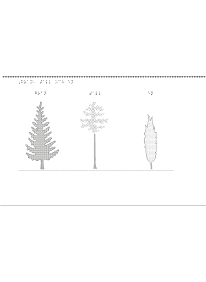 En bild på en gran, en tall och ett enträd.