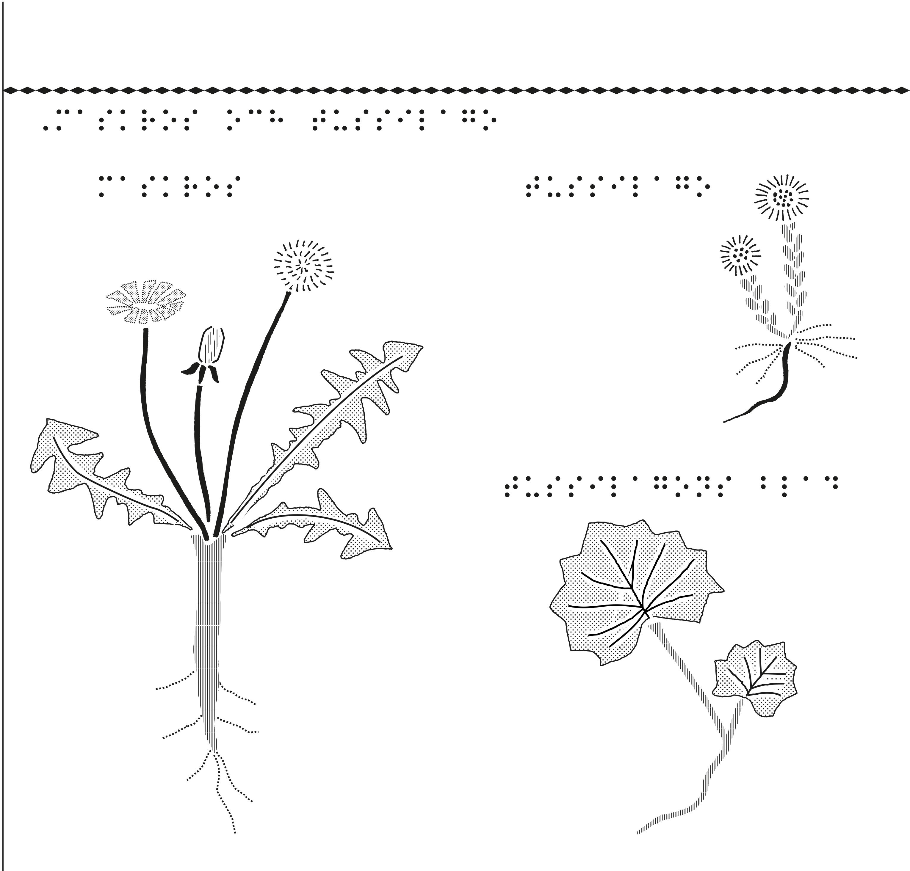 Fröväxter, maskros och tussilago.