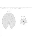 En bild på näckrosens blad och blomma.