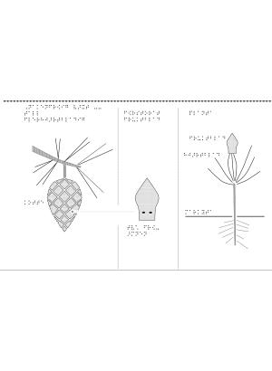 En bild som visar en nakenfröing växt.