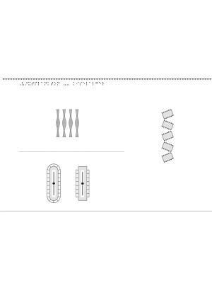 Växtplankton, kiselalger.