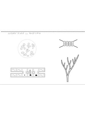 Växtplankton, grönalger.