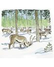 En renflock i en snöig skog.